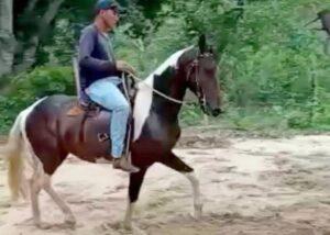 Vendo cavalo Mangalarga Marchador