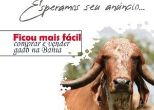 Anuncie seu gado, site especializado em venda de animais no Estado da Bahia.