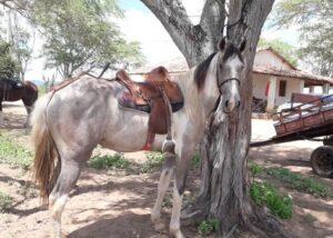 Vendo cavalos mestiços de Mangalarga Marchador